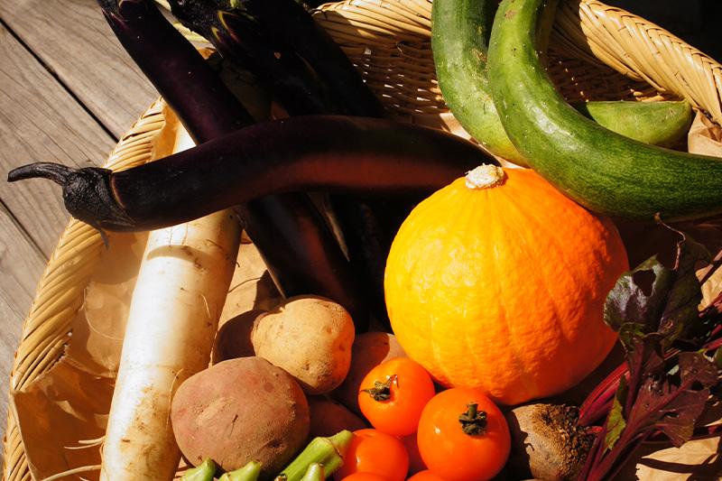 マリポ農園で収穫された色とりどりの野菜の写真