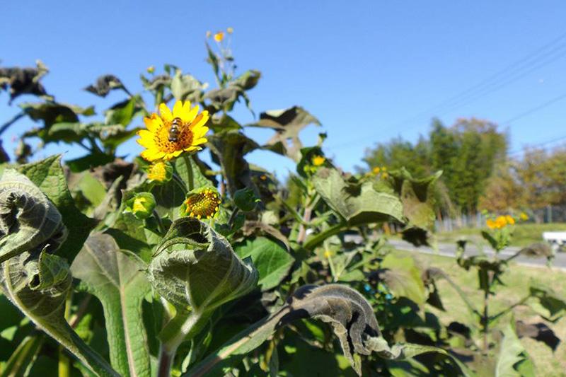 生物多様性重視の畑の写真